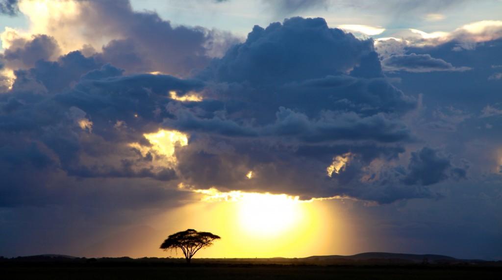 African sunset crop